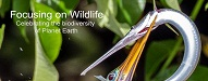 Top Photography Blogs 2020 | Focusing on wildlife